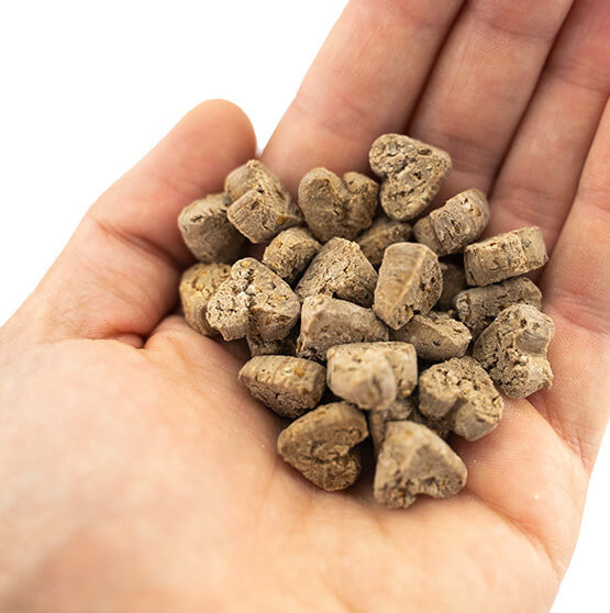 Hundekekse aus Insekten von Tenetrio bio Training
