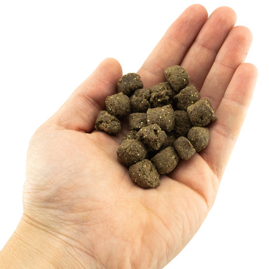 Nachhaltiges Trockenfutter mit Insekten allergikerfreundlich